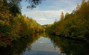 Картинка лес, вода, облака, деревья