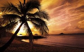 Zakat palma more