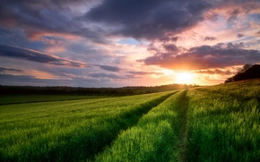 Картинка поле, небо, облака, закат, весна, вечер, Май