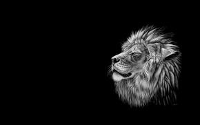Картинка минимализм, лев, арт, чёрно белое, heather lara