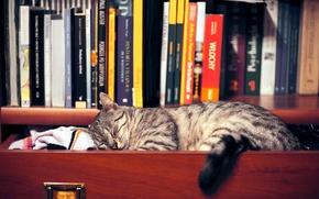 Картинка кошка, одежда, книги, сон, полка, шкаф