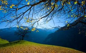 Картинка осень, небо, трава, листья, деревья, горы