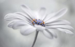 Обои цветок, природа, лепестки, стебель