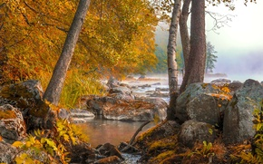 Картинка осень, лес, туман, озеро, утро