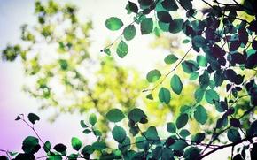 Картинка листья, макро, деревья, зеленый, фон, дерево, green, widescreen, обои, листва, размытие, листик, wallpaper, форма, листочек, ...