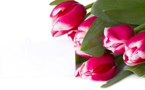Картинка листья, букет, тюльпаны, белый фон, бутоны, крупным планом
