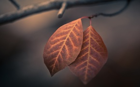 Картинка осень, макро, листва