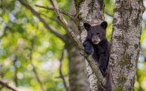 Картинка дерево, малыш, медведь, медвежонок