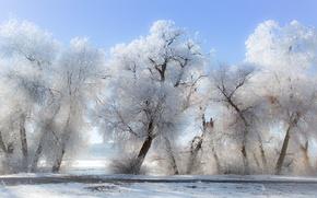 Картинка зима, иней, снег, деревья