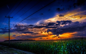 Картинка пейзаж, закат, провода, кукуруза