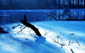 Обои Мороз, Иней, Зима, Ветки, Голубой, Свет, Лёд