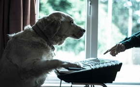Картинка друг, собака, музыкант