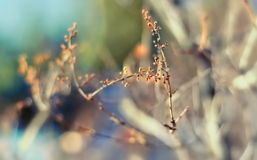Картинка природа, фокус, весна, размытость, боке, веточки