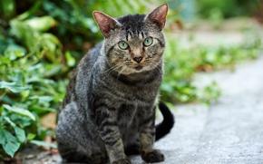 Картинка зелень, кошка, кот, улица, котэ