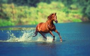 Картинка лето, вода, солнце, брызги, природа, река, конь, лошадь, бег, боке