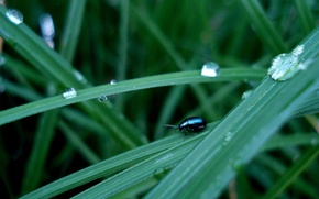 Картинка трава, капли, жук