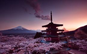 Обои sakura, fujiyama, Churei Tower