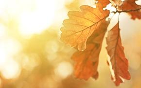 Картинка макро, пейзаж, природа, Индия, красивая, landscape, nature, beautiful, солнечные лучи, macro, Autumn trees, India, sunbeams, ...