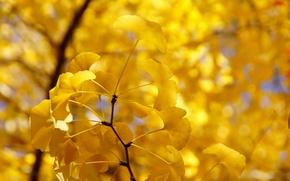 Картинка осень, листья, дерево, ветка, желтые
