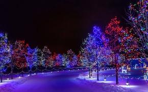 Картинка Новый Год, парк, иллюминация, снег, праздник, зима, дорога, деревья, город, ночь
