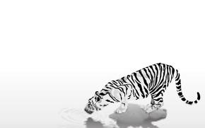 Картинка животные, простота, полоски, тигр, black & white, черно-белый, осторожность, жажда