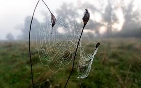 Картинка лето, туман, роса, паутина, утро