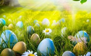 Картинка трава, лучи, свет, цветы, природа, яйца, весна, пасха