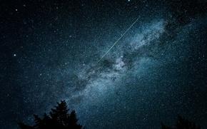 Обои звезды, ночь, небо, дерево