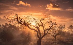 Картинка осень, небо, свет, дерево