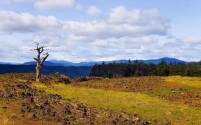 Картинка лес, лето, небо, облака, пейзаж, горы, природа, дерево, скалы, сухое