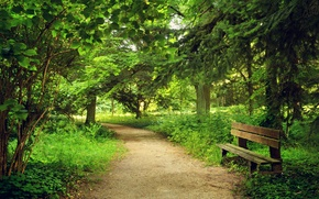 Картинка Природа, Деревья, Скамейка, Лето, Парк