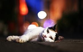 Обои блики, котяра, кот, смотрит, котэ