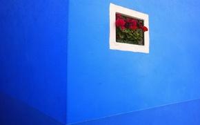 Картинка цветы, стена, решетка, угол, синяя, герань, окошко, калачик