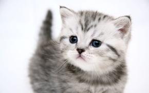 Обои кошка, котенок, хорошенький