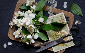 Обои стиль, цветки, ножницы, доска, открытка, букетик, натюрморт, жасмин