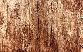 Картинка дерево, текстура, дуб