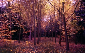 Картинка Осень, Деревья, Лес, Парк, Fall, Park, Autumn, Forest, Trees, Листопад, Leaves