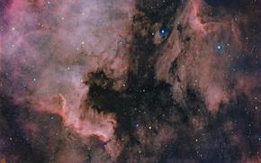 Обои Северная Америка, Пеликан, космос, туманности