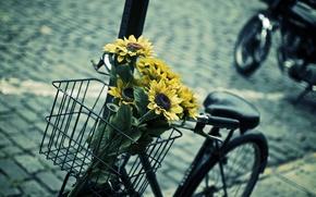 Картинка листья, цветы, синий, желтый, велосипед, фон, widescreen, обои, корзина, настроения, подсолнух, размытие, контраст, wallpaper, цветочки, ...