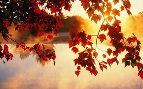 Обои красота, лучи, свет, солнце, деревья, осень, листья