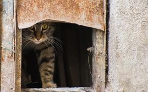 Картинка кошка, кот, улица, котэ, выглядывает, проём