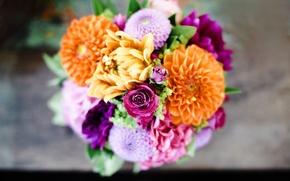Обои букет, цветы, георгины, оранжевые