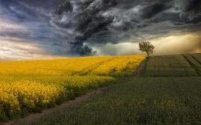 Картинка гроза, поле, тучи, дерево, кукуруза, рапс
