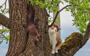 Картинка кошка, дерево, встреча, белка, на дереве