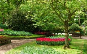 Картинка цветы, парк, весна, сад, Nature, park, flowers, garden, spring