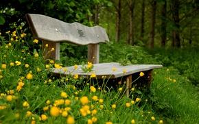 Картинка зелень, цветы, скамейка, зеленый, фон, widescreen, обои, растительность, настроения, желтые, лавочка, лавка, wallpaper, цветочки, скамья, …