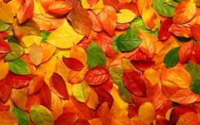 Картинка листья, природа, фото с природой, макро осень