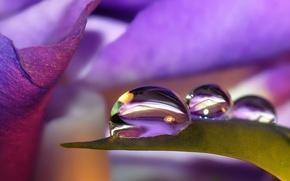 Обои природа, отражение, цветок, капли