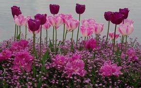 Обои клумба, тюльпаны, весна, сад