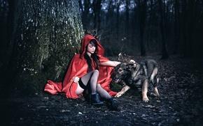 Картинка лес, девушка, дерево, собака, ножки, плащ, Arya, Laurent KC